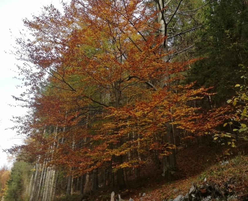Am Weg zur Falkensteinmauer Hermine Fuxsteiner Fotowettbewerb Frankenfels