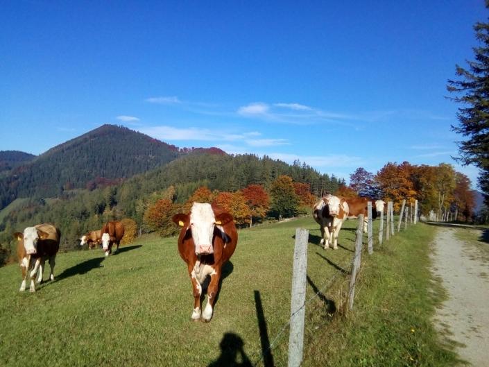 Blick auf Frankenfels' höchsten Berg Heinz Leb Fotowettbewerb Frankenfels