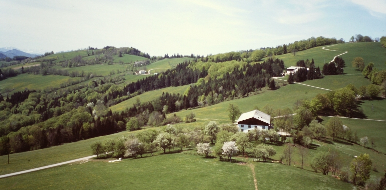 Frühling am Frankenfelsberg Johann Henikl Fotowettbewerb Frankenfels