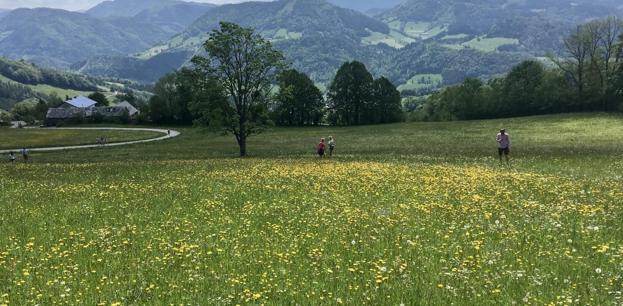 Martin Fuchs Fotowettbewerb Frankenfels